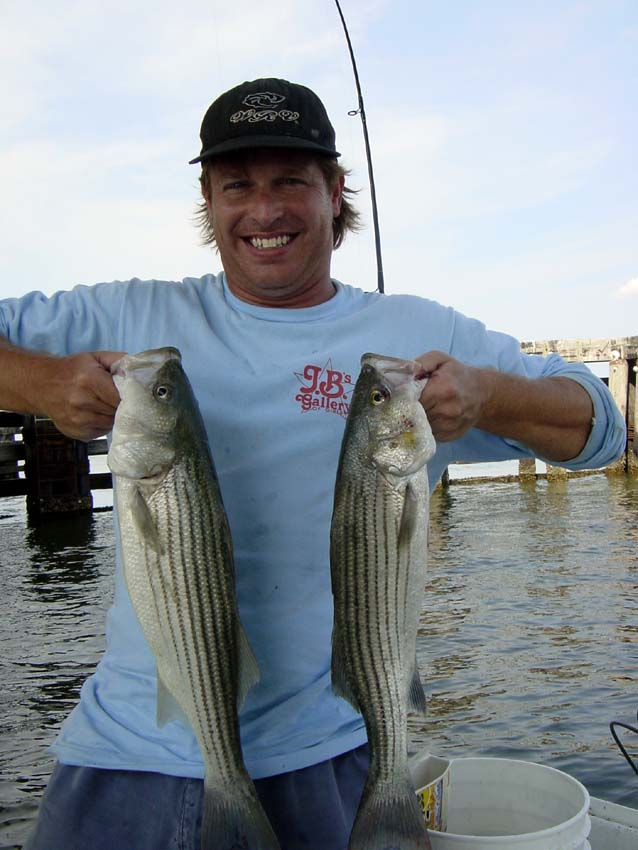 Gyotaku by brett swindell art and fishing photo gallery for Striper fishing chesapeake bay