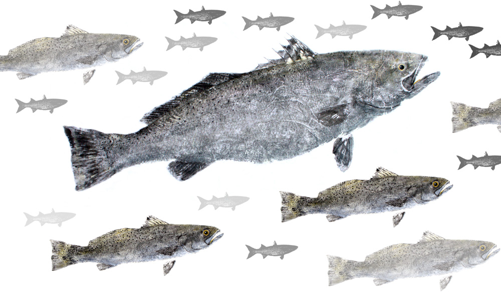 Speckled Trout Limited Edition Print