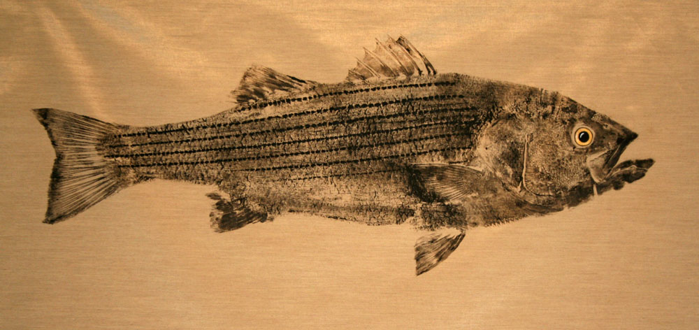 Original art gyotaku fish prints - Striped Bass on gold silk