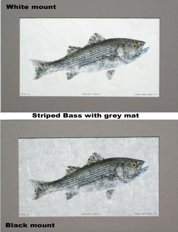 Striped Bass Print